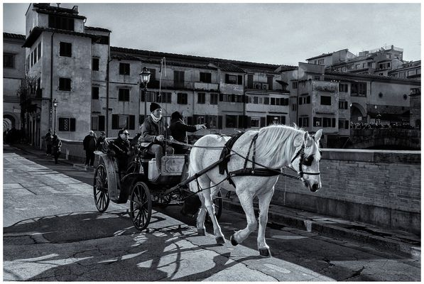 """""""Le fiacre du cheval blanc"""""""