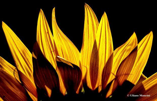le fiamme