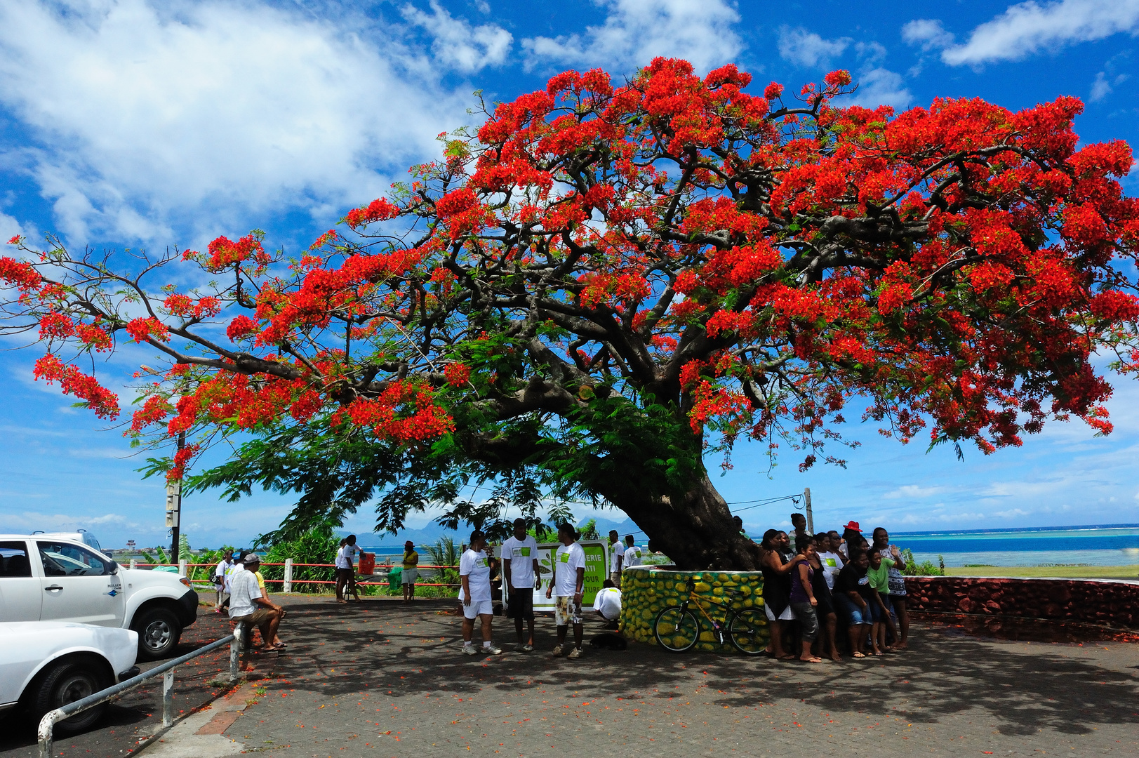 le flamboyant de faaa delonix regia photo et image arbres tahiti nature images fotocommunity. Black Bedroom Furniture Sets. Home Design Ideas