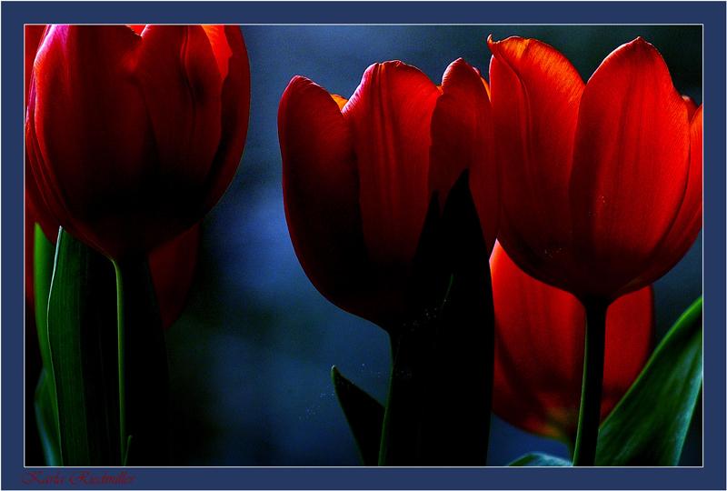 ... le fleur dans la nuit ...