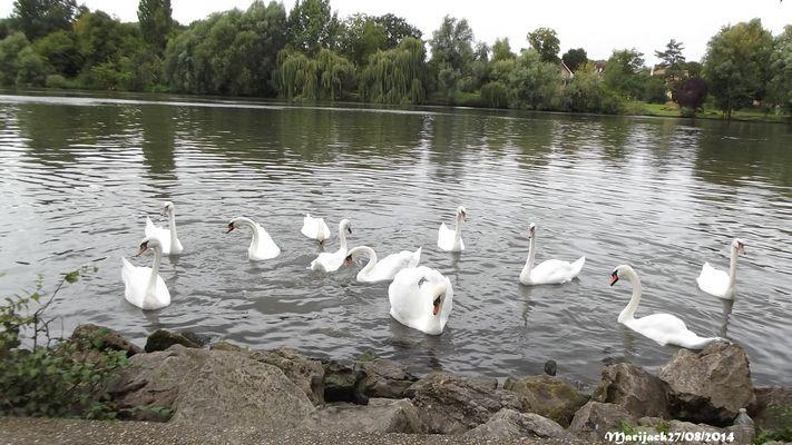 ...Le fleuve des cygnes...