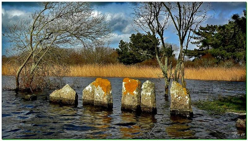 Le fond de l'étang un matin d'automne .