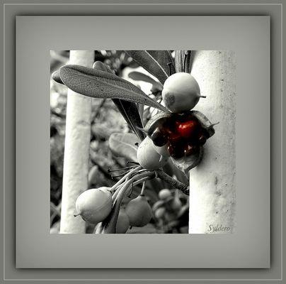 Le fruit rouge