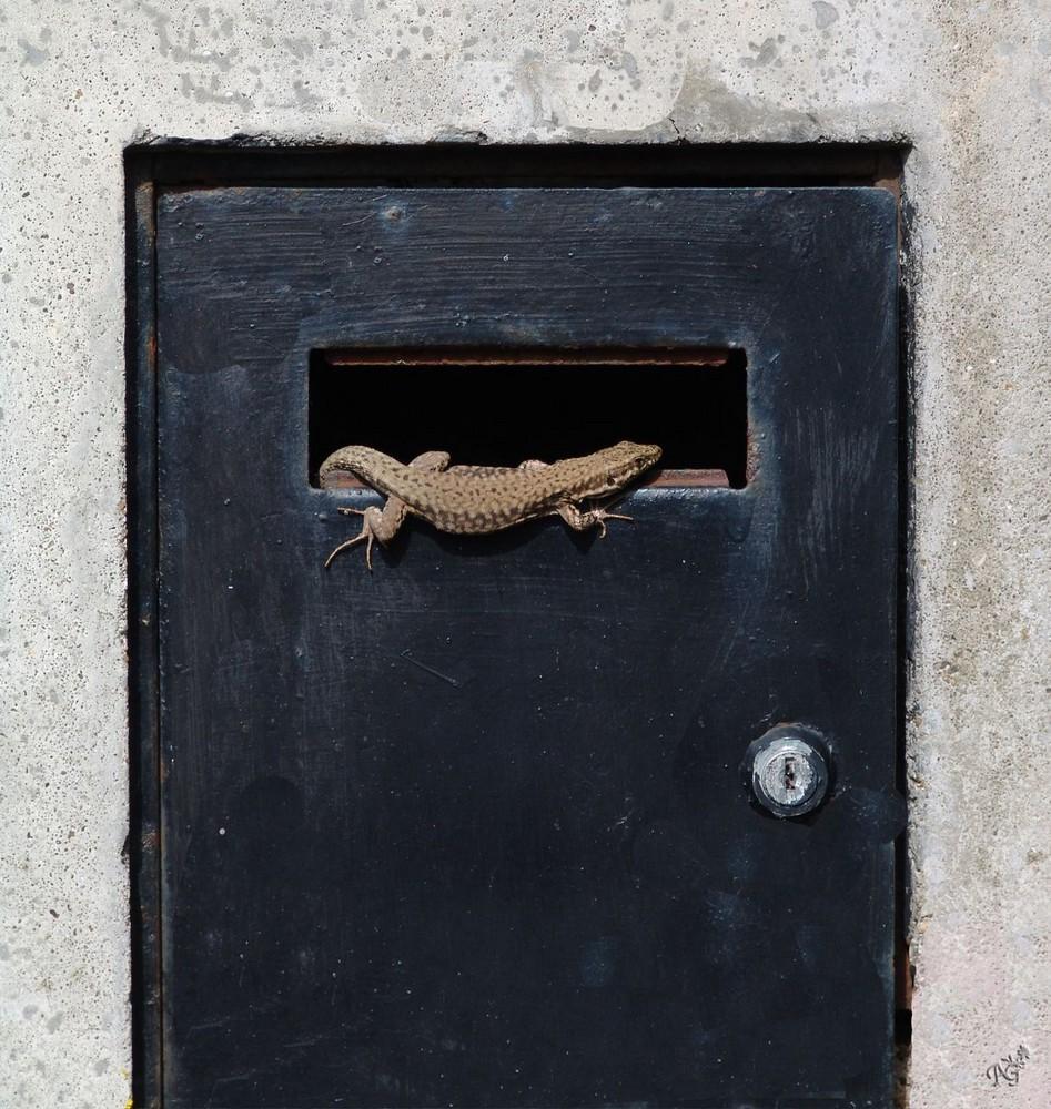 le gardien du courrier ......... !