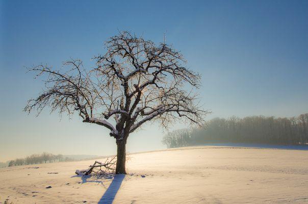 Le grand calme blanc