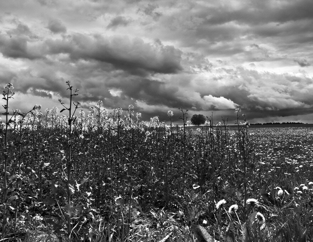 Le gris au printemps