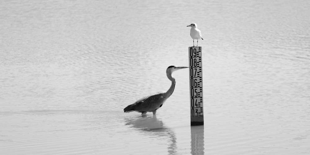 Le Heron-metre