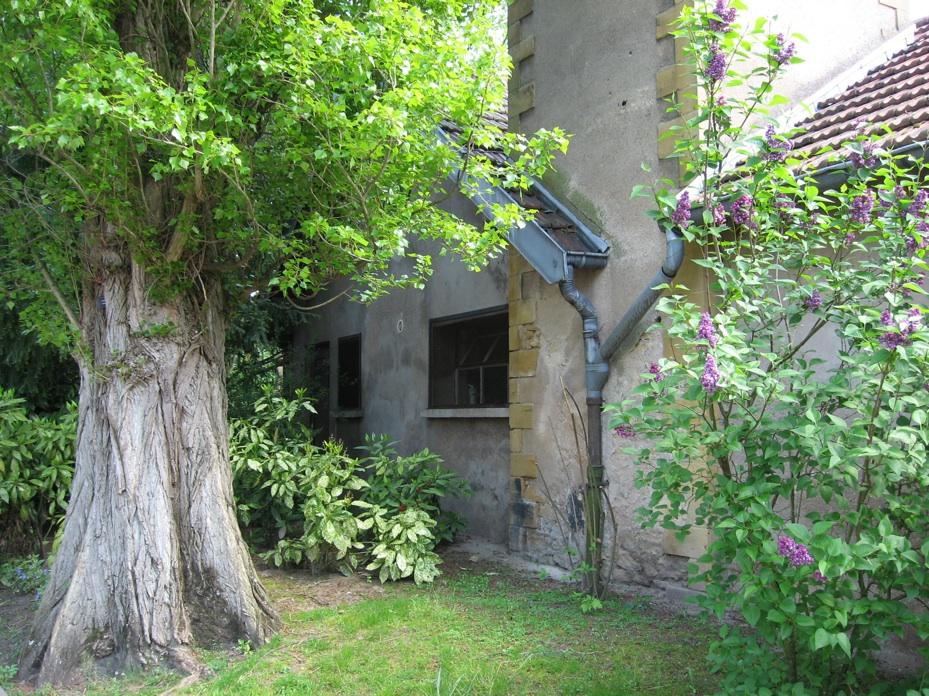 Le jardin botanique 10
