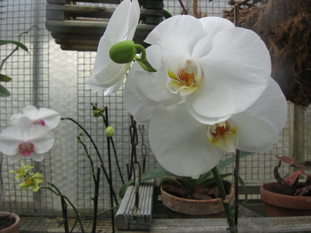 Le jardin botanique 15
