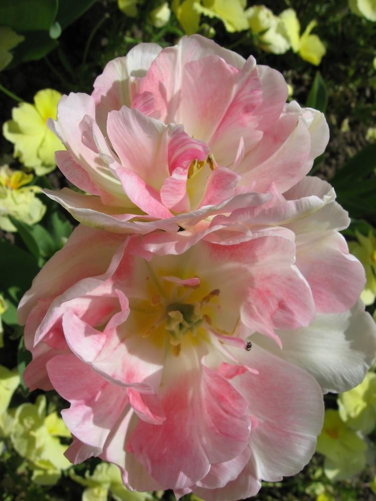 Le jardin botanique 35