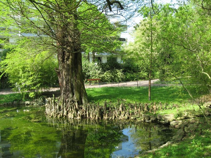 Le jardin botanique 43