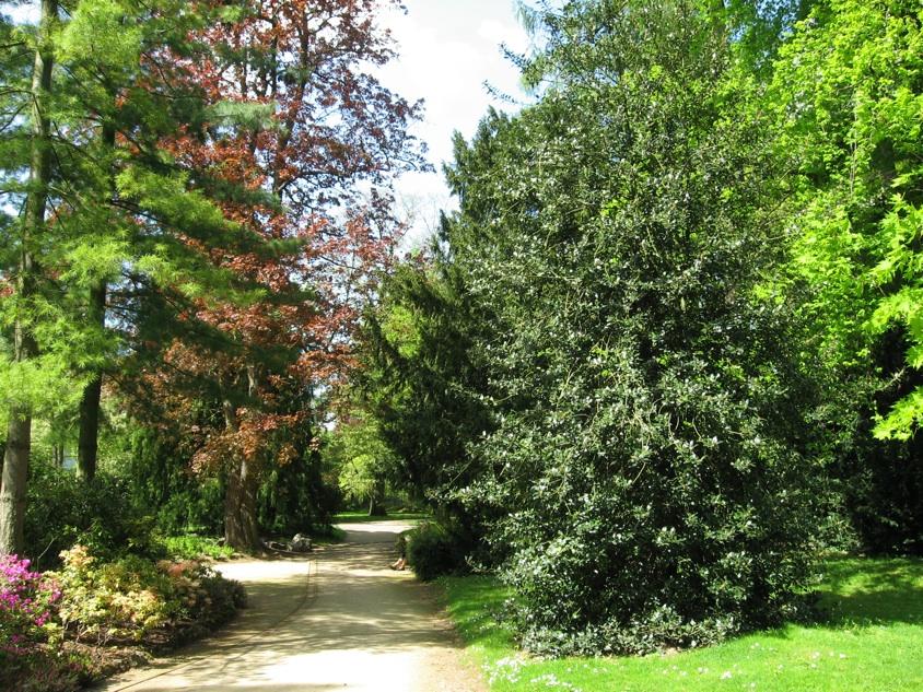 Le jardin botanique 46