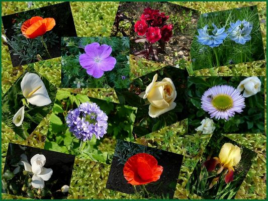 """Le jardin de Papy"" (Juliane)"