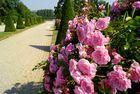 le jardin du château de La Motte Tilly