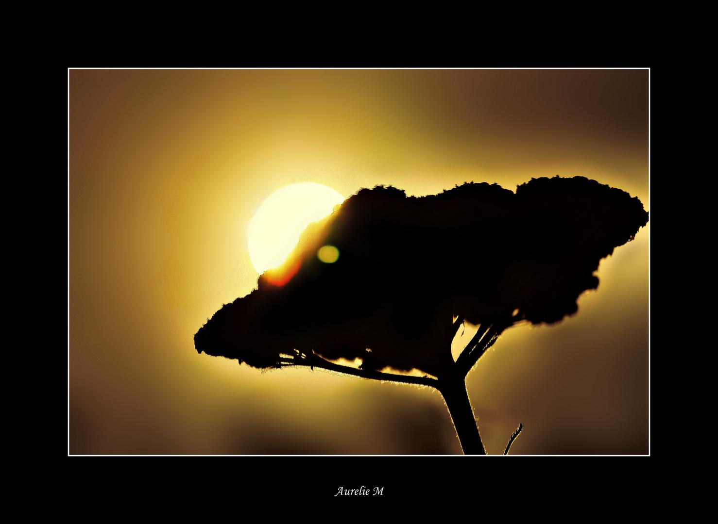 le jour ce lève sur une fleur