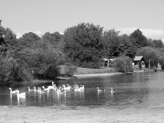 Le lac de la madeleine La teste de buch