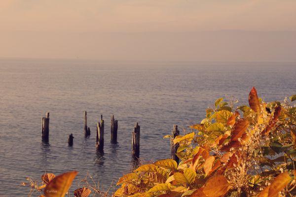 Le Lac depuis la Pinède