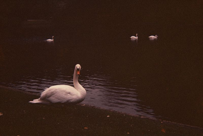 Le Lac des Cygnes - Der Schwanensee - The Swan Lake