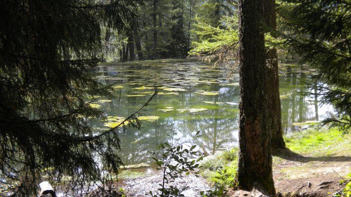 Le lac du Lauzerot