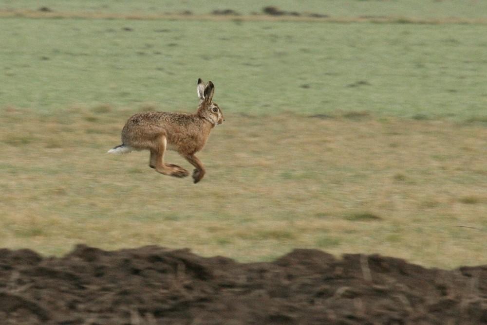 Le lapin de Pâques est en pleine forme cette année