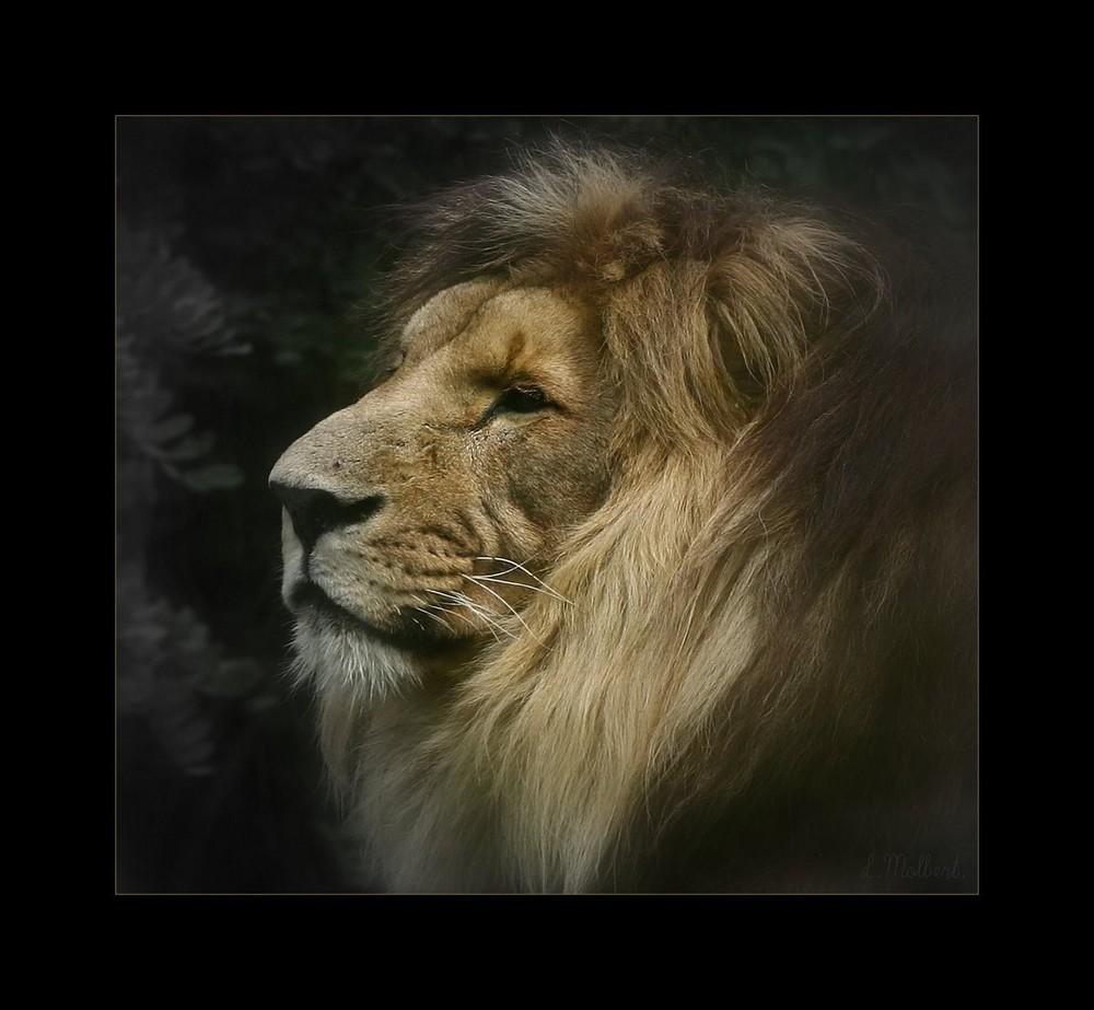 Le Lion poseur