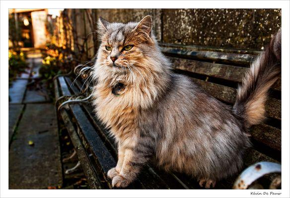 Le majestueux chat !