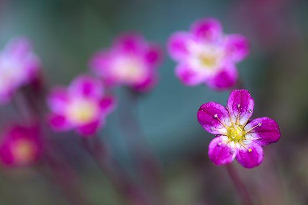 Le monde minuscule des fleurs