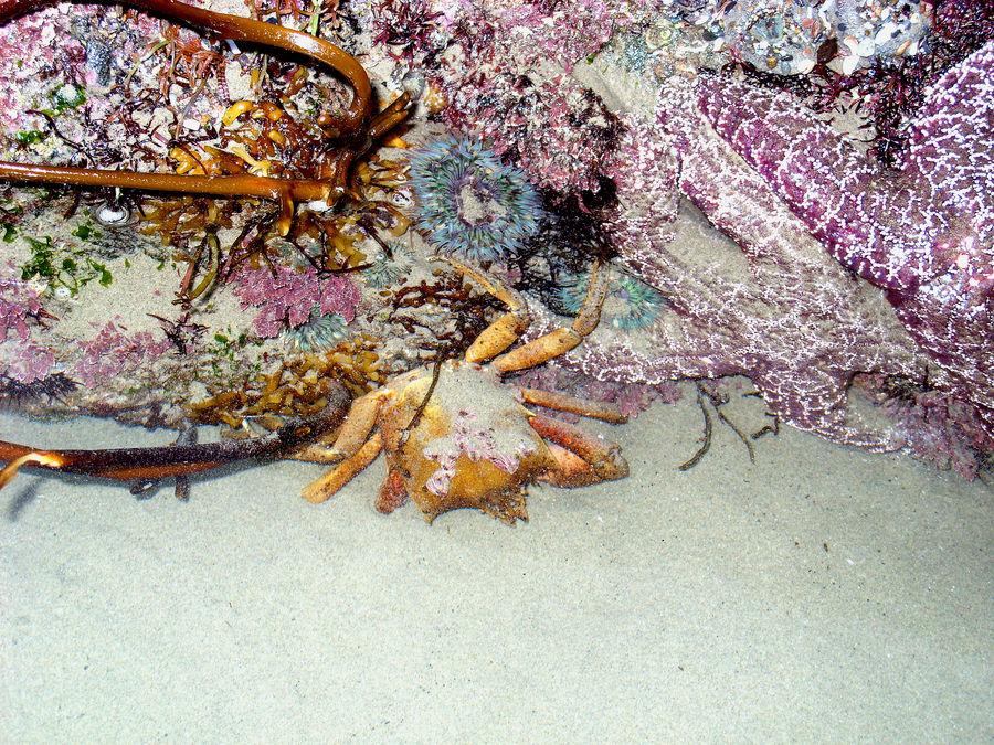 le monde océanique