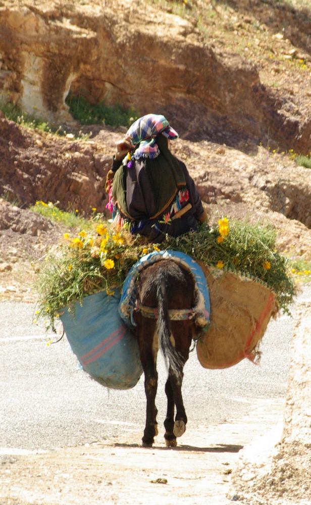 Le monde rural