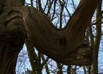 Le monstre des bois