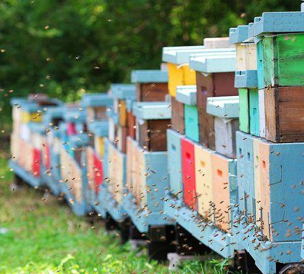 le nostre amiche api