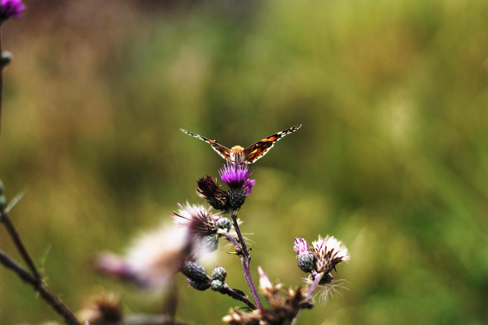 Le Papillon.