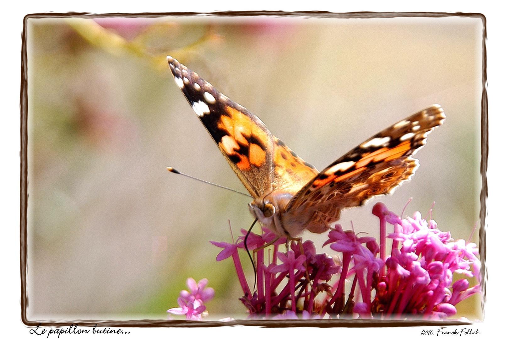 Le papillon...