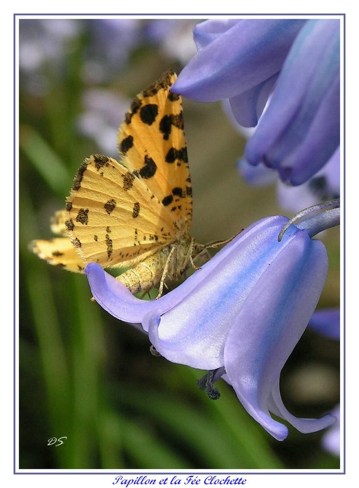 le papillon et la fée clochette