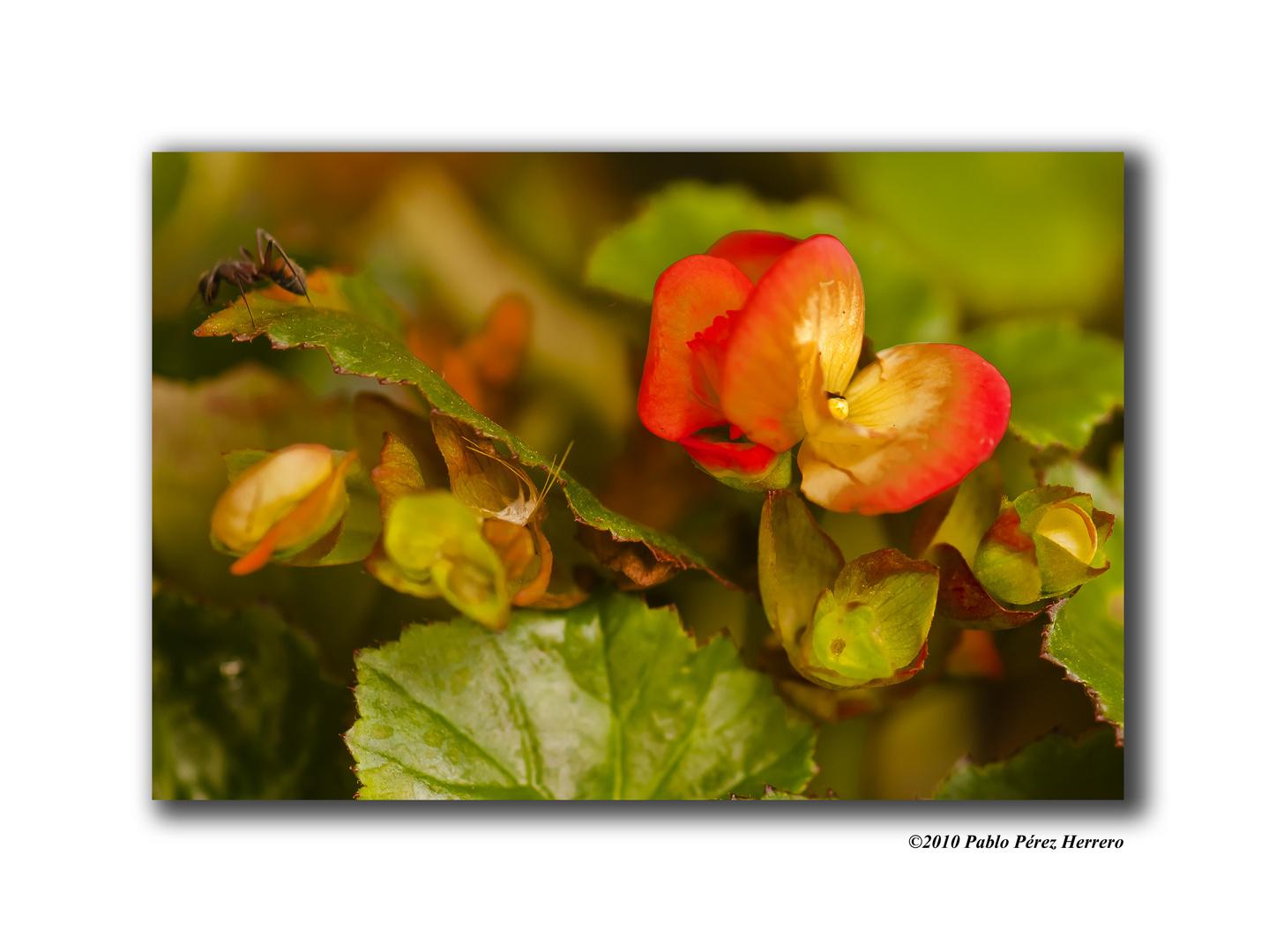 Le papillon et le fourmi