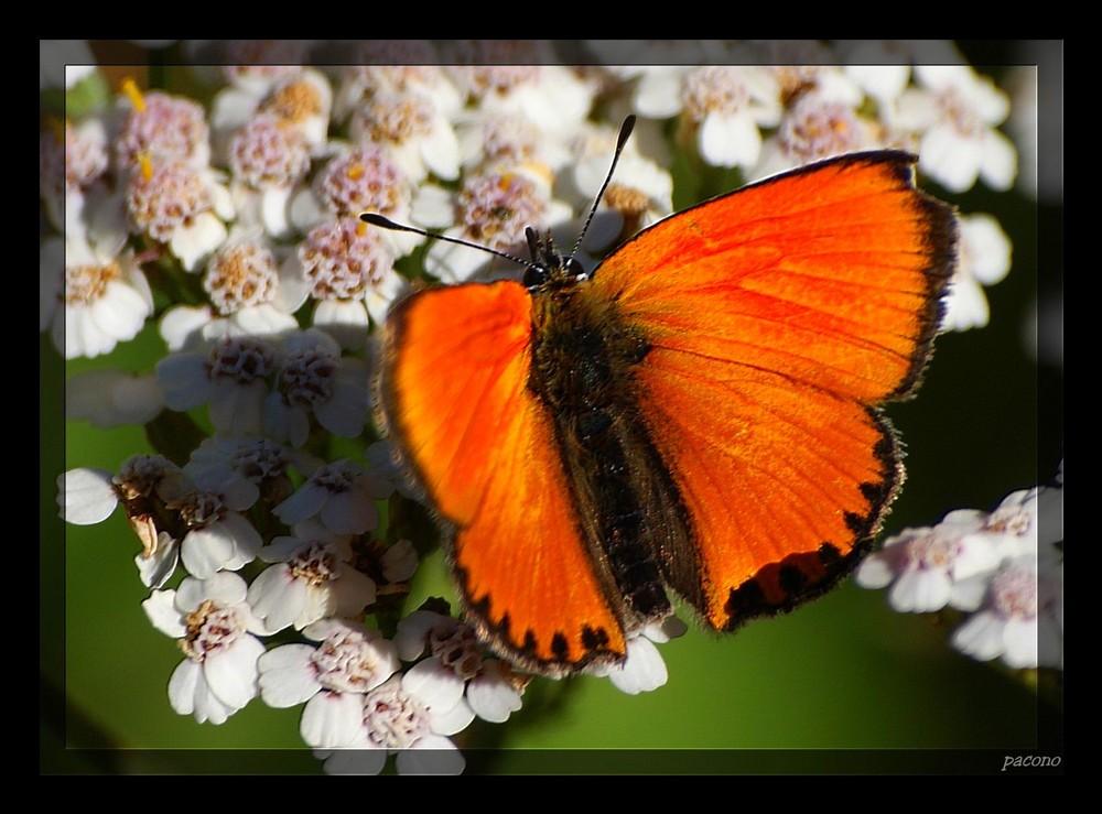 le papillon n°2