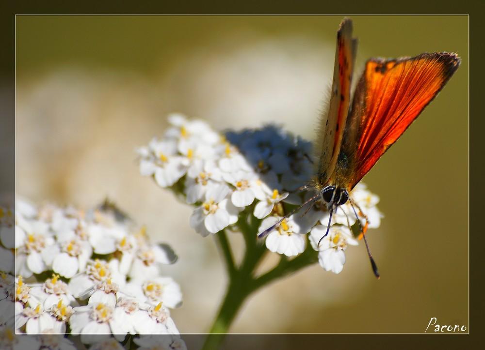 le papillon n°4