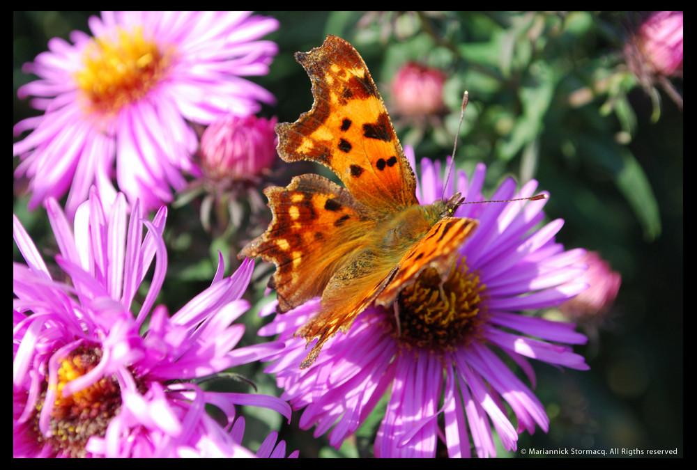 Le papillon, prêt à décoller !