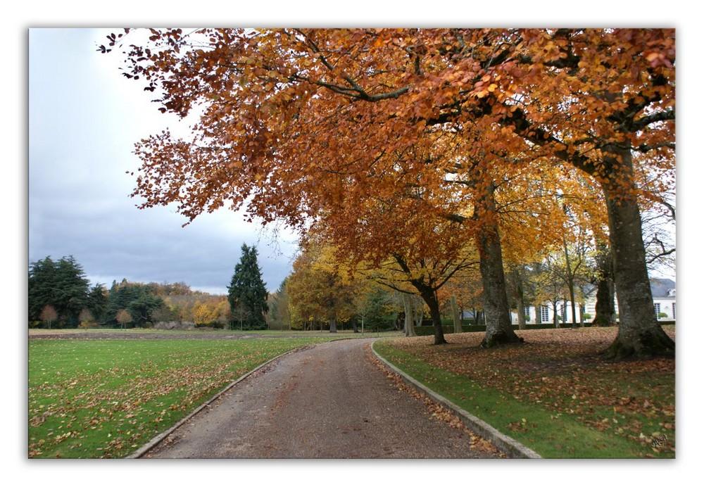 LE PARC DE CHEVERNY en habit d'automne