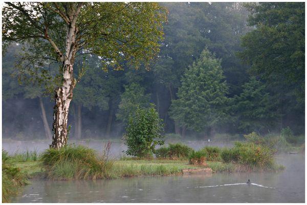 Le Parc des Aulnes à Lillebonne (76)