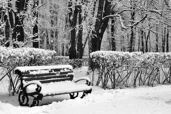 Le parc d'hiver