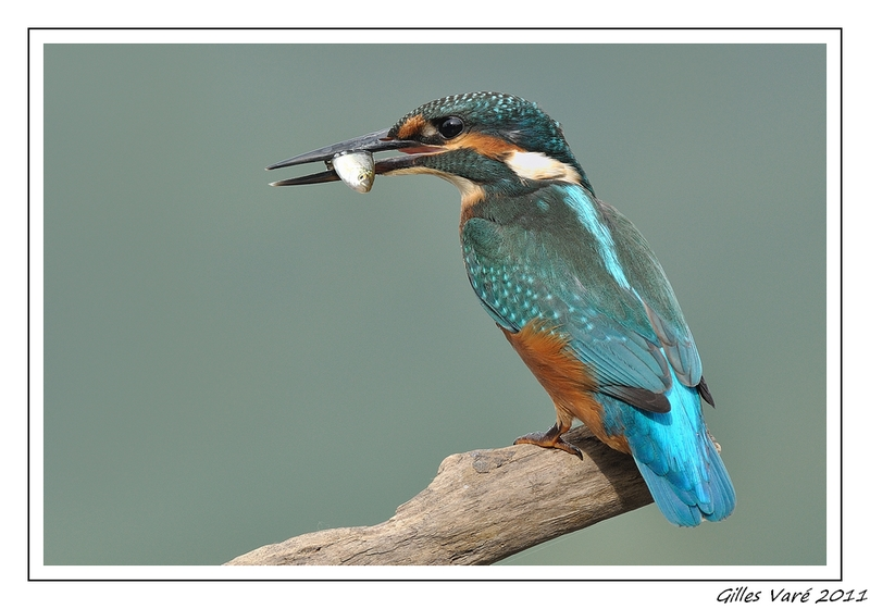 Le pêcheur...