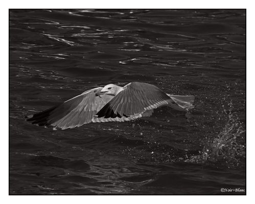 le pêcheur en vol...