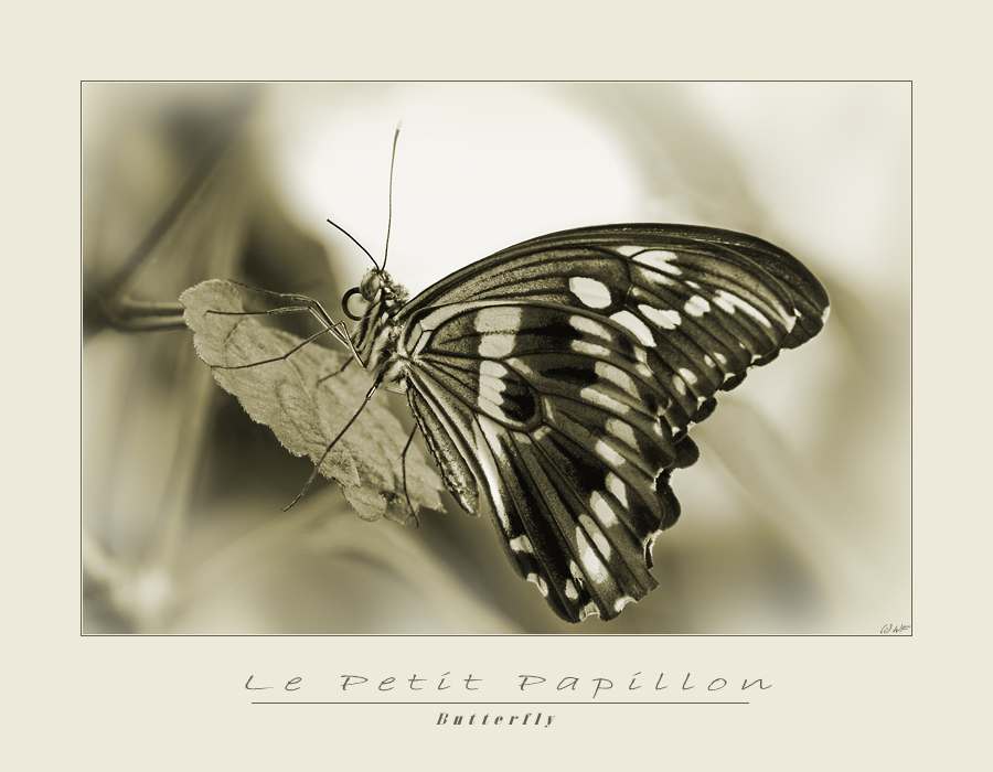 Le Petit Papillon - Zurückgelehnt am Besten zu betrachten