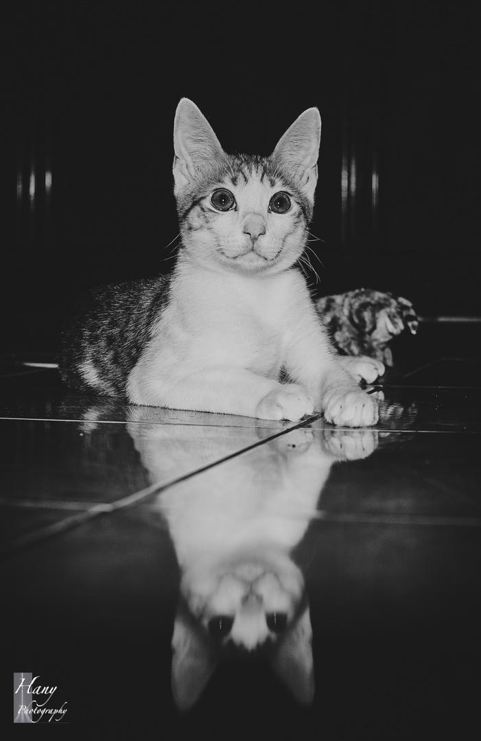 Le Petit Sphinx
