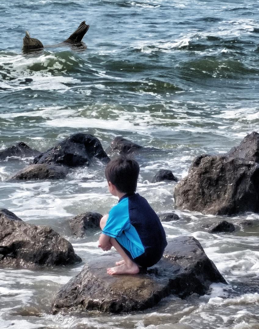 le phoque et l enfant