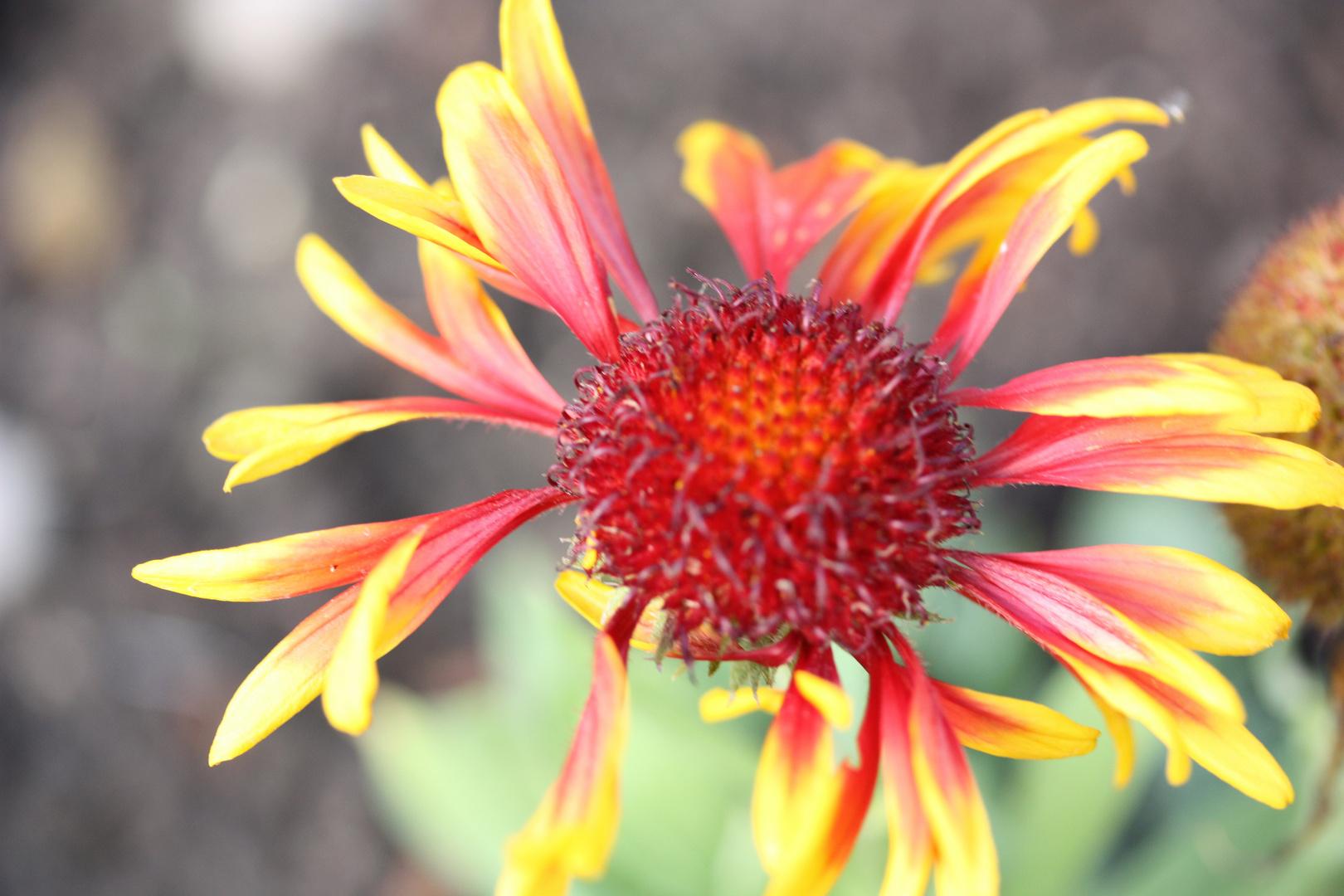 Le piaf floral