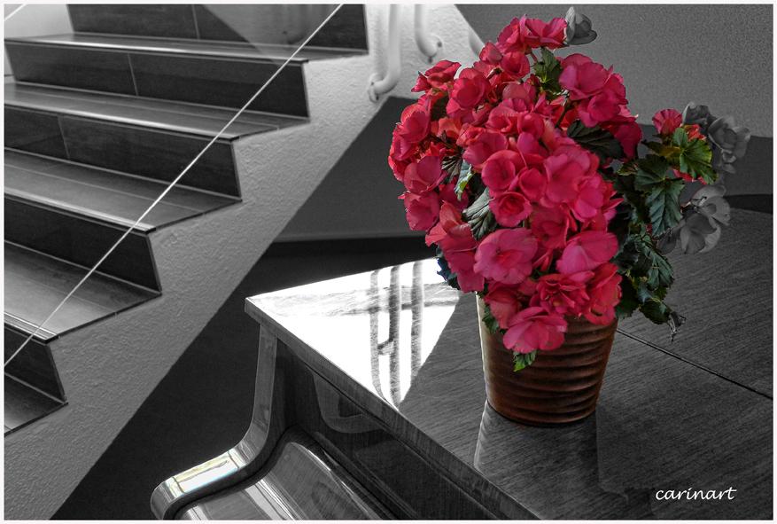 Le piano en fleurs /  Das Klavier in Blüte
