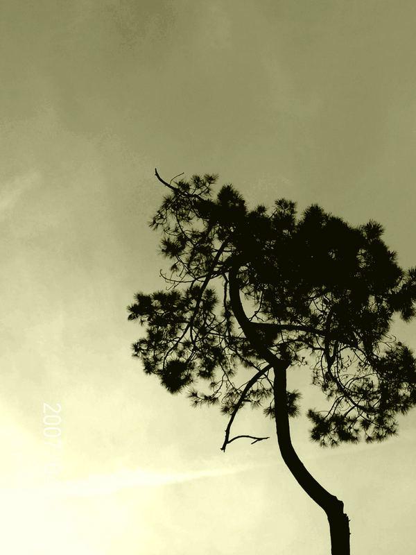 le pins