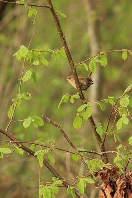 le plus petit des oiseaux de france